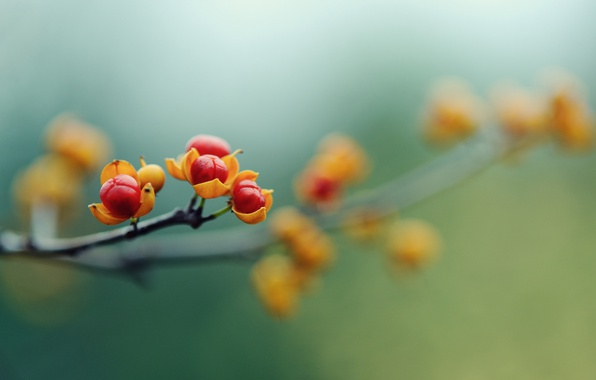 Picture macro, flowers, berries, branch