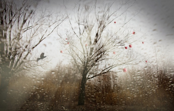 Picture nature, tree, bird, apples, installation