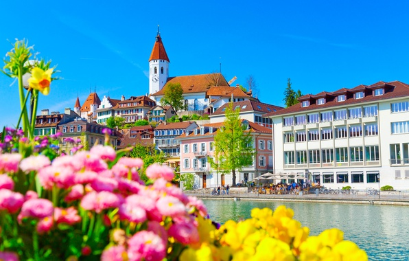 Picture flowers, river, building, home, Switzerland, promenade, Switzerland, Aare river, Aare River, Thun, Tun