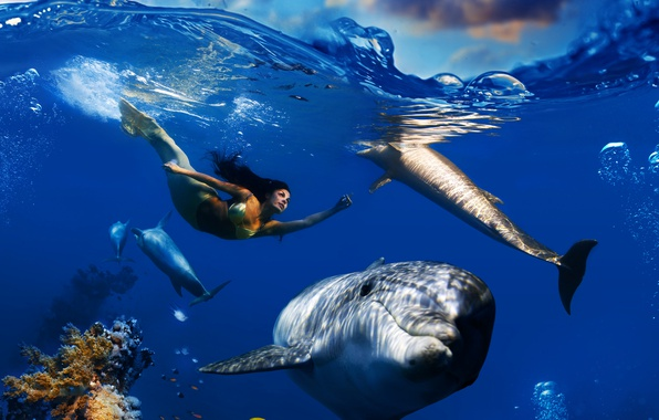 Picture sea, wave, the sky, clouds, fish, bubbles, mermaid, corals, dolphins, underwater world, under water, floats