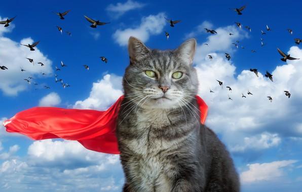 Picture the sky, cat, pigeons, cloak