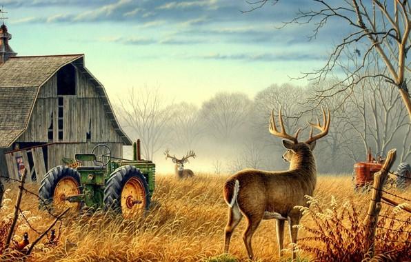 Picture Nature, trees, animals, birds, fog, mood, deer, barn, farm, mist, fences