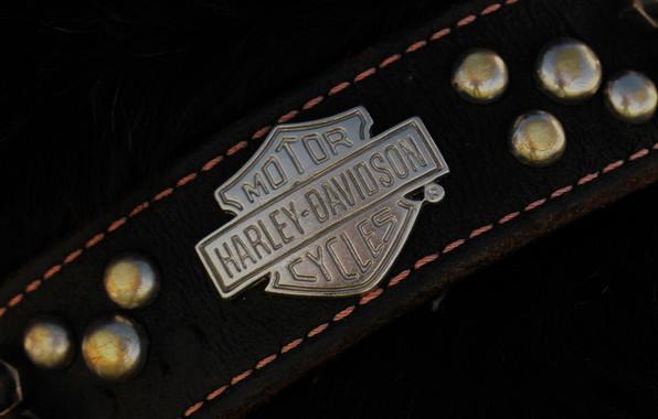 Picture stylish, Moto, dog, collar, Harley-Davidson