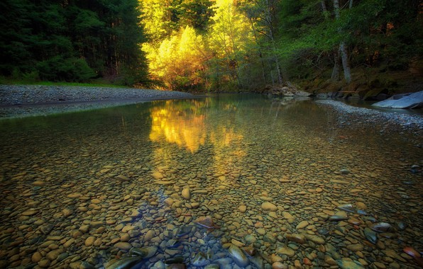Picture Water, Nature, Reflection, Trees, Forest, Leaves, Stones, Branches