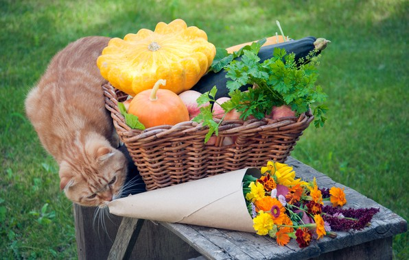 Picture greens, cat, grass, flowers, basket, apples, pumpkin, red, fruit, vegetables, table, bokeh, zucchini