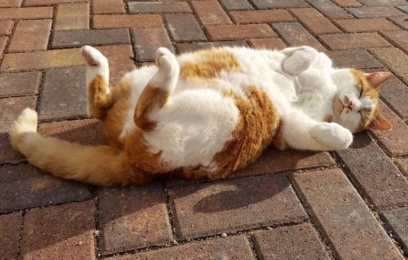 Picture cat, cat, relax, sleep, legs, the sidewalk, chill, sleeping