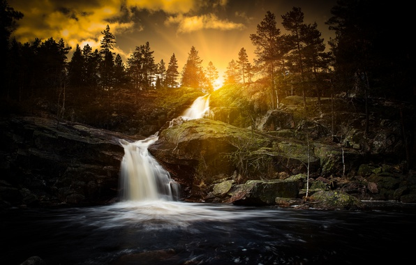 Picture forest, river, waterfall
