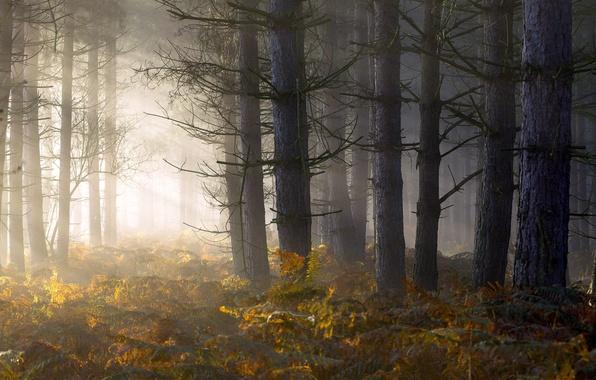 Picture forest, light, fog, morning, fern