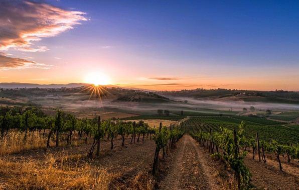 Picture the sky, the sun, rays, trees, fog, dawn, hills, field, home, morning, Italy, plantation, the …
