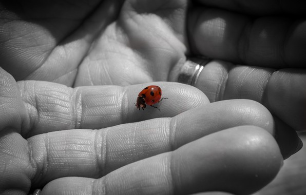 Picture background, ladybug, hands