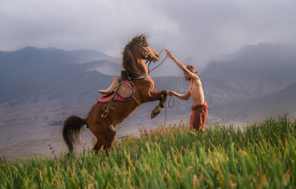 Picture grass, mountains, fog, man, hill, slope, horse, training