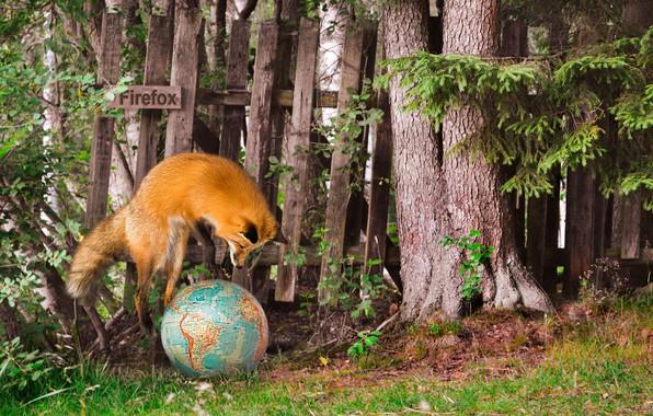 Picture summer, Fox, mozilla firefox