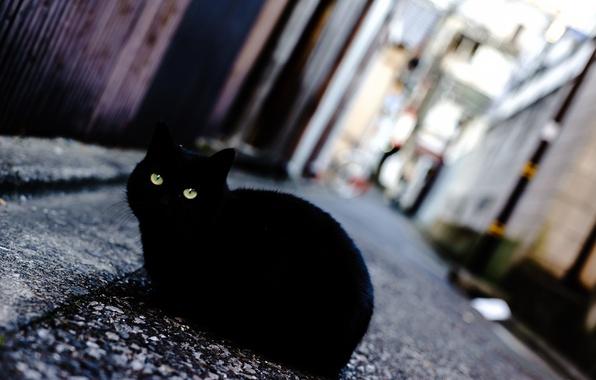 Picture eyes, cat, street, black