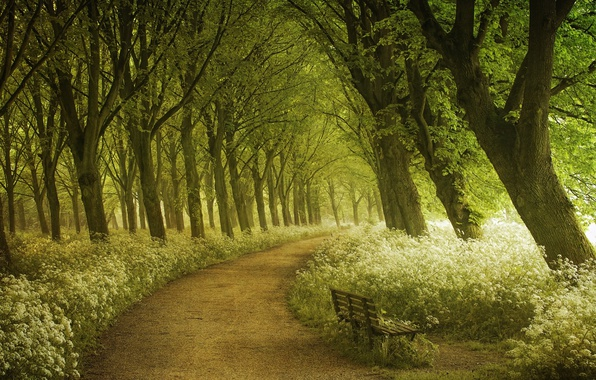 Picture forest, summer, light, trees, spring, Amsterdam, photographer, track, shop, path, Lars van de Goor
