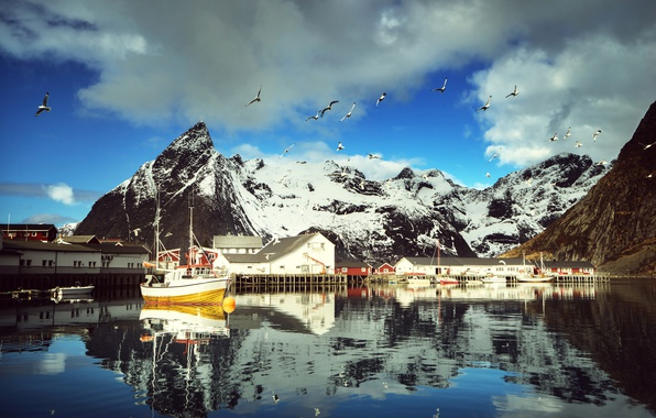 Picture winter, the sky, water, clouds, snow, mountains, birds, reflection, seagulls, Bay, yachts, boats, Norway, boat, …