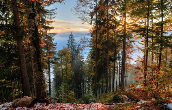 Picture Autumn, Trees, Snow, Forest, Fall, Foliage, Snow, Autumn, Forest, Trees, Leaves