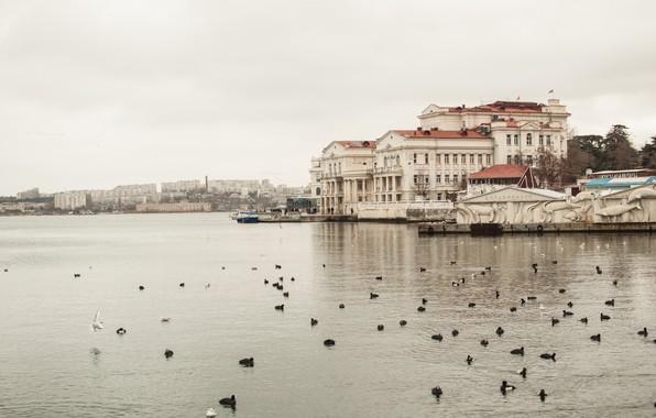 Picture sea, Bay, Crimea, Sevastopol, winter in the Crimea