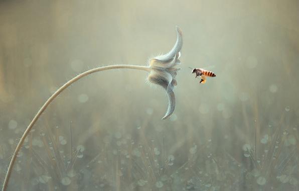 Picture flower, macro, bee, background, bokeh