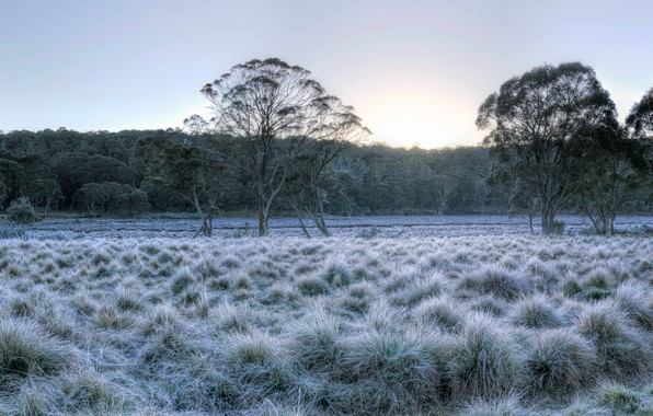 Picture frost, forest, the sky, grass, the sun, trees, Park, dawn, Australia, Barrington Tops National Park