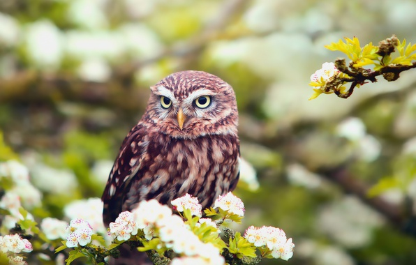 Picture flowers, owl, bird, foliage, branch, spring, bokeh