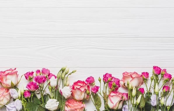 Picture Flowers, Background, Roses, Eustoma