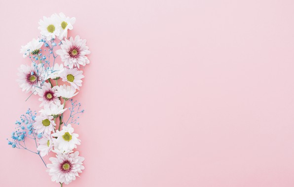 Picture flowers, background, branch, chrysanthemum, decor