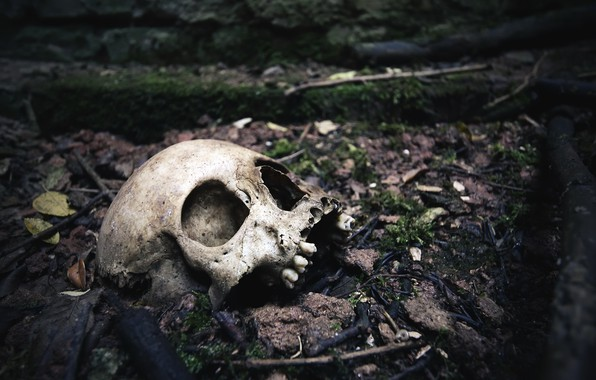 Picture skull, teeth, naturalism