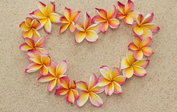 Picture sand, beach, flowers, heart, love, beach, heart, flowers, romantic, sand, plumeria, plumeria, floral