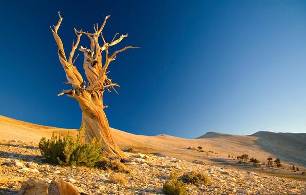 Picture landscape, tree, desert, barkhan
