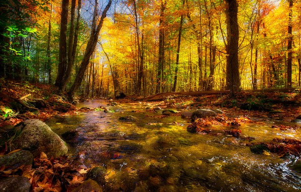 Picture autumn, forest, trees, nature, river, beauty, stream