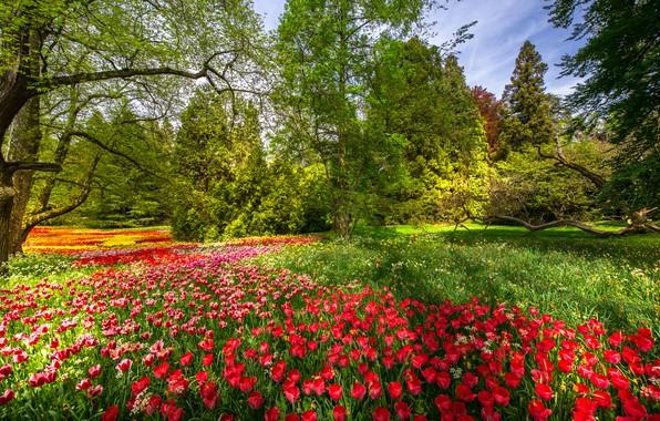 Picture trees, flowers, Park, spring, Germany, tulips, Germany, Baden-Württemberg, Baden-Württemberg, Mainau Island, Mainau Island