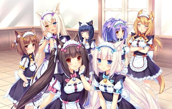 Picture girls, form, neko, ears, anime, art, Vanilla, Maple, Chocola, Cinnamon, Anything Para, Azuki, Coconut
