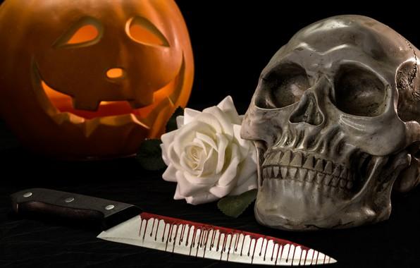 Picture blood, rose, skull, knife, pumpkin, Halloween