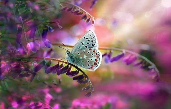 Picture leaves, macro, nature, stems, butterfly, flowers, Mustafa Öztürk