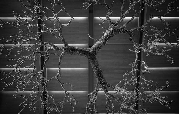 Picture drops, branches, black and white photo