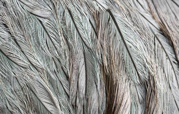 Picture Feathers, Grey, Texture
