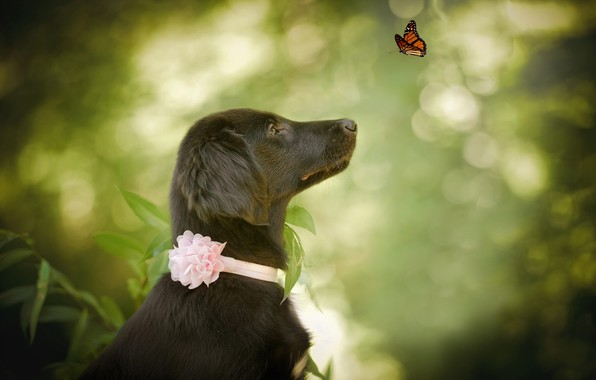 Picture nature, animal, butterfly, dog, profile, dog, bokeh