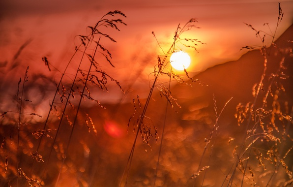 Picture grass, sunrise, dawn, Norway, bokeh