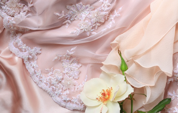 Photo wallpaper rose, flower, lace, fabric