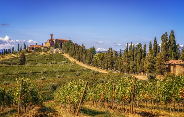 Picture greens, the sky, the sun, clouds, trees, hills, field, home, Italy, vineyard, the bushes, Tuscany, ...