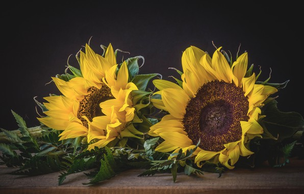 Picture yellow, sunflower, petals