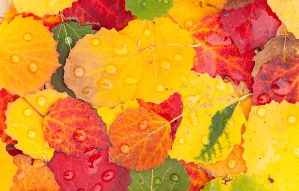 Picture autumn, leaves, drops