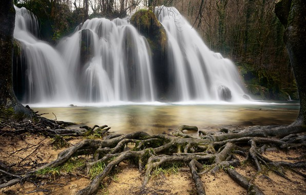 Picture roots, river, tree, waterfall
