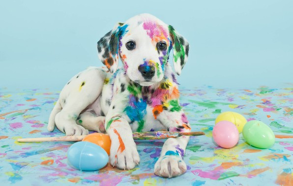 Picture paint, eggs, puppy, brush