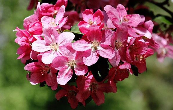 Picture flowers, beauty, spring, flowering