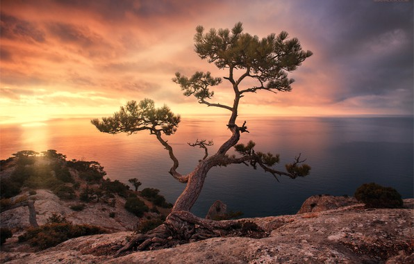 Picture sea, landscape, sunset, rock, tree