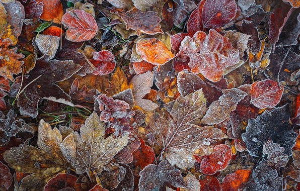 Picture autumn, forest, macro, foliage, frost