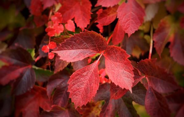 Picture autumn, leaves, sprig