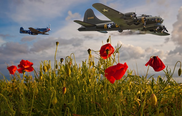 Picture the sky, clouds, flight, aviation, flowers, Mac, Maki, aircraft, red, al, military, fly, poppy field, …