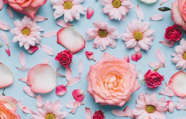 Picture flowers, background, roses, buds, chrysanthemum, Lepestki